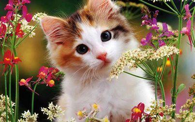 بالصور صور قطط جميلة , اجمل الحيوانات 2126 2