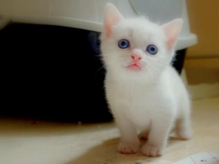 بالصور صور قطط جميلة , اجمل الحيوانات 2126 6