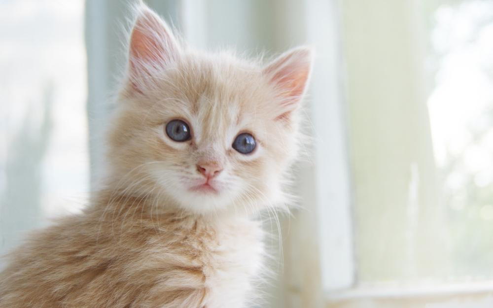 بالصور صور قطط جميلة , اجمل الحيوانات 2126 8