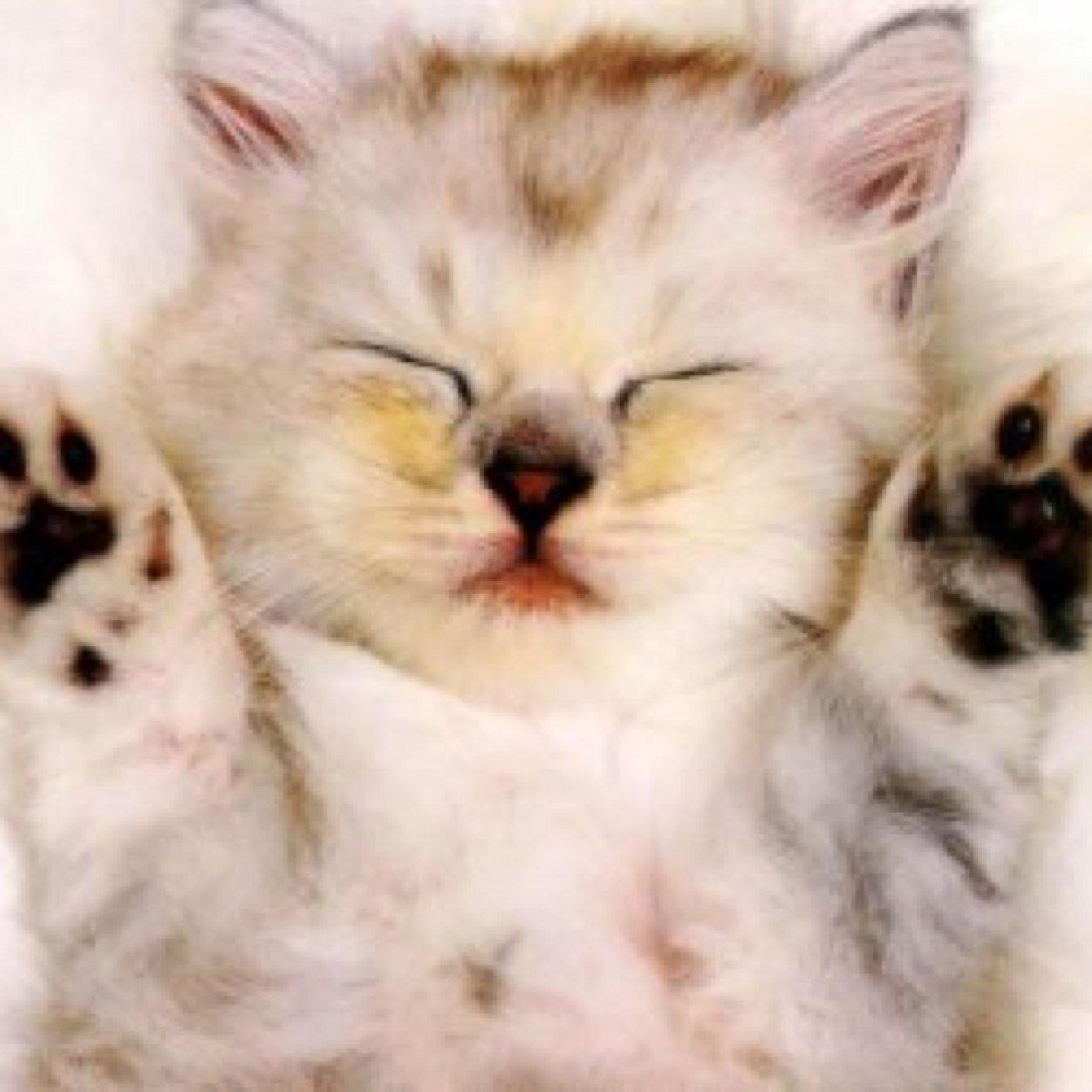 بالصور صور قطط جميلة , اجمل الحيوانات