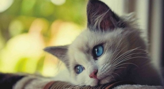 صورة صور قطط جميلة , اجمل الحيوانات