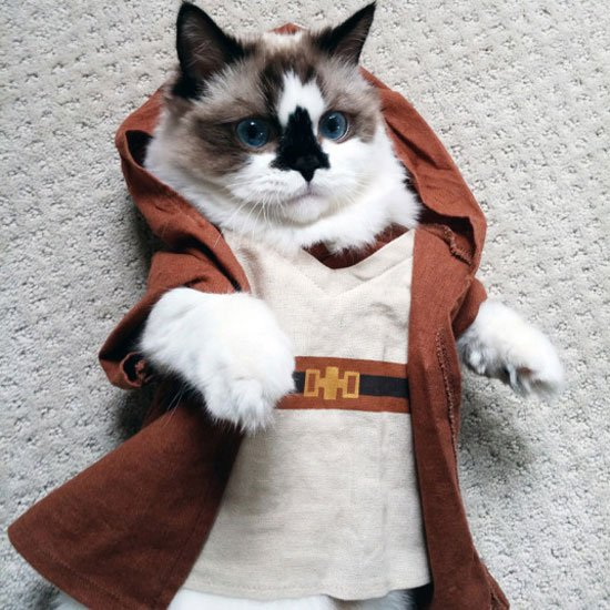 صورة صور قطط مضحكة , شايفين شقاوة البسبس و لعبها المسلي