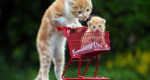 صوره صور قطط مضحكة , شايفين شقاوة البسبس و لعبها المسلي
