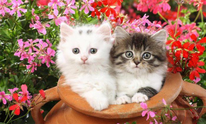 بالصور صور قطط مضحكة , شايفين شقاوة البسبس و لعبها المسلي 2177 4