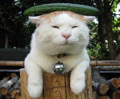 بالصور صور قطط مضحكة , شايفين شقاوة البسبس و لعبها المسلي 2177 6