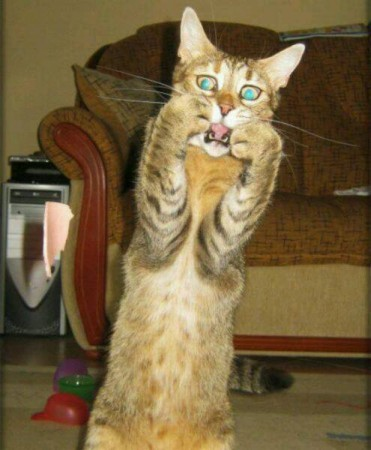 بالصور صور قطط مضحكة , شايفين شقاوة البسبس و لعبها المسلي 2177 8