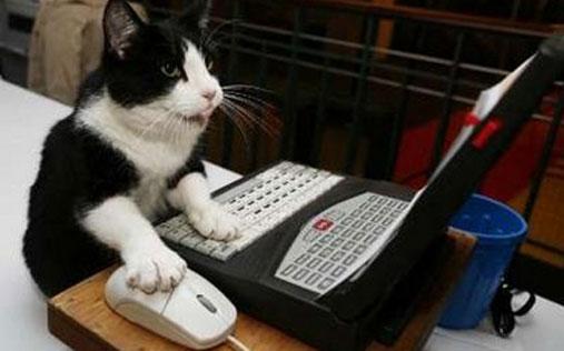 بالصور صور قطط مضحكة , شايفين شقاوة البسبس و لعبها المسلي 2177 9