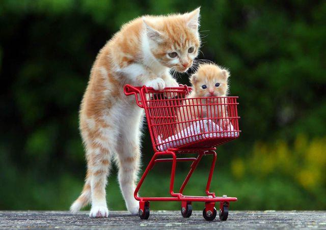 بالصور صور قطط مضحكة , شايفين شقاوة البسبس و لعبها المسلي 2177