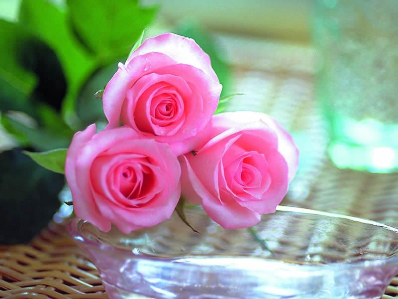 صوره صور ورود جميله , شوف الزهور واتعلم اجمل لغة بين العشاق