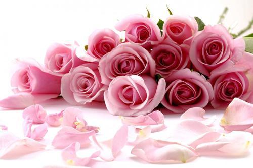بالصور صور ورود جميله , شوف الزهور واتعلم اجمل لغة بين العشاق 2207 6