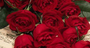 صورة صور ورود جميله , شوف الزهور واتعلم اجمل لغة بين العشاق