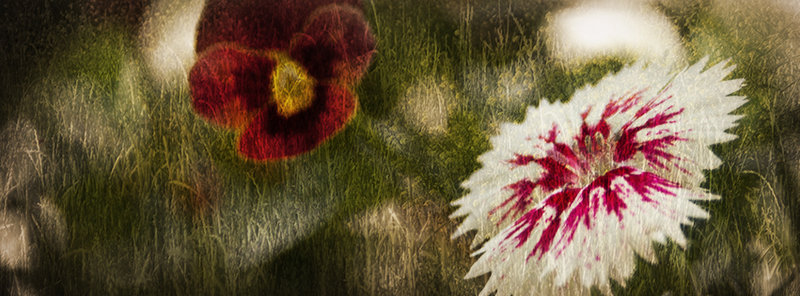 بالصور صور غلاف كروب , الاثارة و الجمال تجدة في كفرات الفيس 2441 4