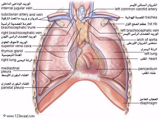 بالصور صور جسم الانسان , سبحان الله الذي سوي وابدع في البشر 2509 2