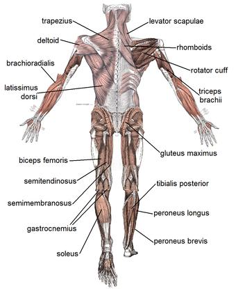 صوره صور جسم الانسان , سبحان الله الذي سوي وابدع في البشر