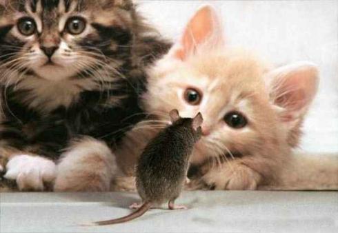 بالصور صوره قطه , صور القطط كثيرة لكن هذه افضل صور قطط شفتها 3791 2