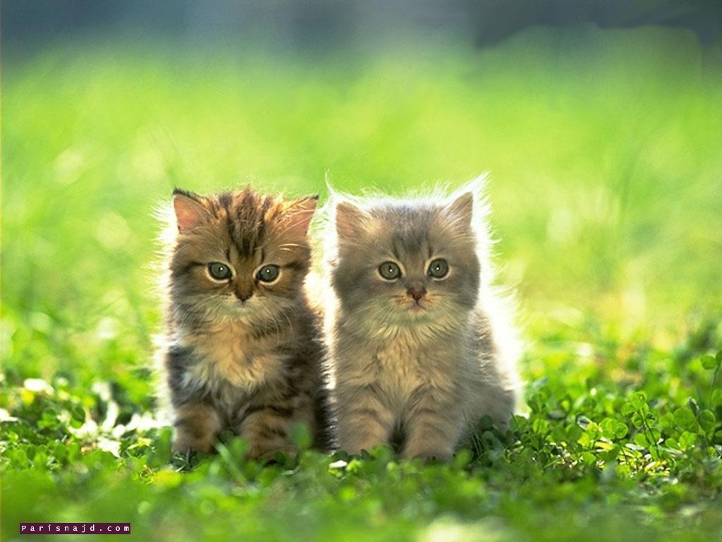 بالصور صوره قطه , صور القطط كثيرة لكن هذه افضل صور قطط شفتها 3791 4