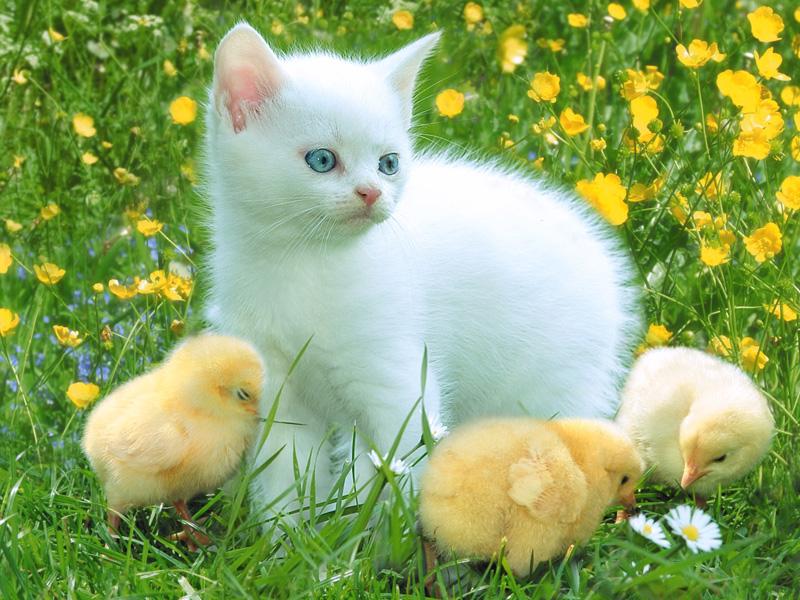بالصور صوره قطه , صور القطط كثيرة لكن هذه افضل صور قطط شفتها 3791 5