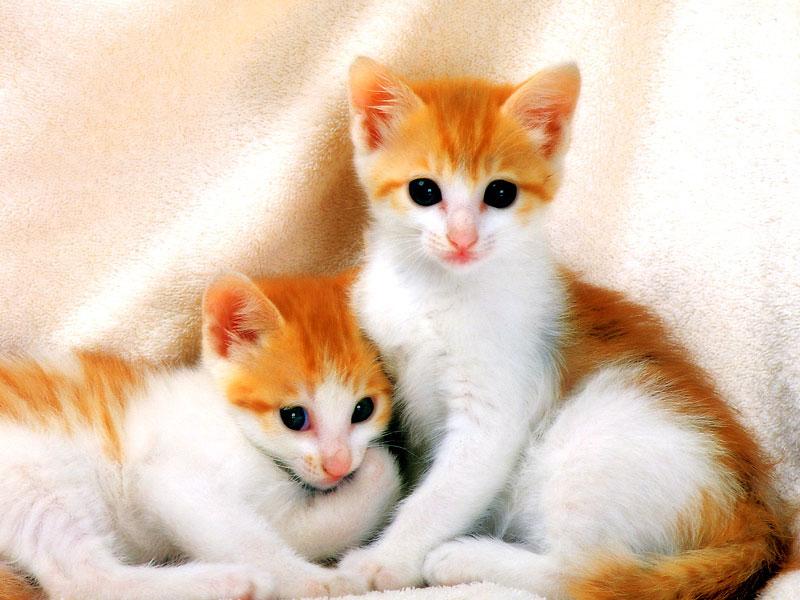 بالصور صوره قطه , صور القطط كثيرة لكن هذه افضل صور قطط شفتها 3791 6