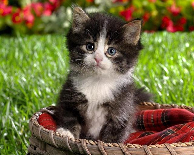 بالصور صوره قطه , صور القطط كثيرة لكن هذه افضل صور قطط شفتها 3791 7