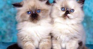 صوره قطه , صور القطط كثيرة لكن هذه افضل صور قطط شفتها