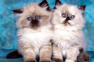 صورة صوره قطه , صور القطط كثيرة لكن هذه افضل صور قطط شفتها
