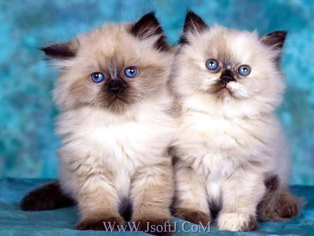 صور صوره قطه , صور القطط كثيرة لكن هذه افضل صور قطط شفتها