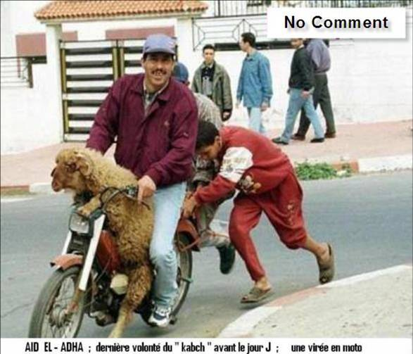 بالصور صور جزائرية مضحكة , قفشات تموت من الضحك من شعب الجزائر 2153 3