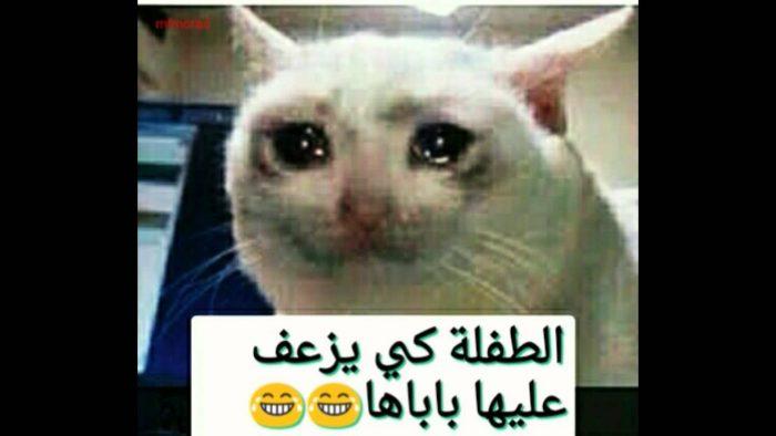 بالصور صور جزائرية مضحكة , قفشات تموت من الضحك من شعب الجزائر 2153 7