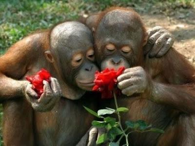 بالصور صور مضحكه عن الحب , اضحك و فرفش و متشلشي للدنيا هم 2195