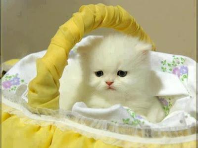 صورة صور حيوانات اليفه , لعشاق القطط والكلاب احلي البوستات