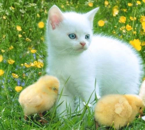 بالصور صور حيوانات اليفه , لعشاق القطط والكلاب احلي البوستات 2196 3
