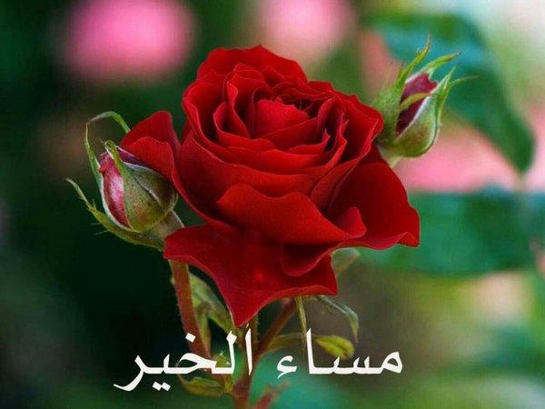 بالصور صور مساء الورد , مسي علي حبيبك برائحة الزهور 2283 6