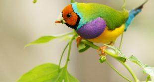 صوره صور طيور , اجمل صور للطيور على الاطلاق