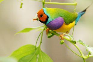 صورة صور طيور , اجمل صور للطيور على الاطلاق