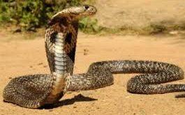 بالصور تفاسير رؤى قتل الحية في المنام , تعرف على تفسير حلم قتل الثعبان عند ابن سيرين 4410 1 265x165