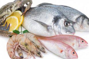 بالصور تفاسير رؤى الاسماك فى المنام , ماهو تفسير السمك في الحلم لابن سيرين؟ 4422 310x205