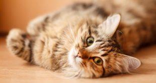 طريقة طرد القطط من المنزل , طريقة سهلة لابعاد القطط عن المنزل