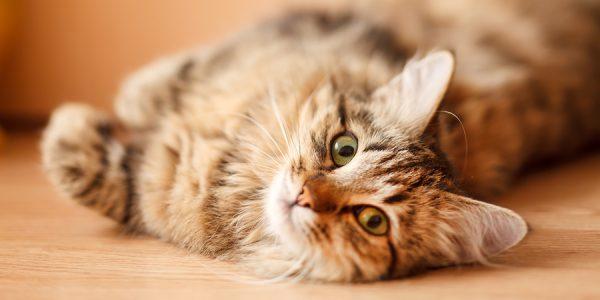 صورة طريقة طرد القطط من المنزل , طريقة سهلة لابعاد القطط عن المنزل
