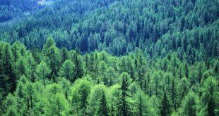 صور اكبر غابة في العالم , تيغا وتصينفها كابر غابة فى العالم