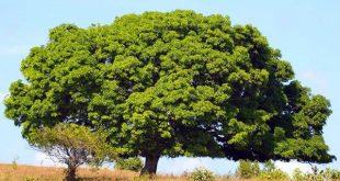 صورة تفسير الاحلام شجرة , معنى ظهور الاشجار فى المنام