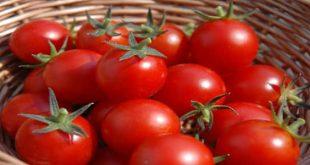 تفسير الاحلام الطماطم , رؤية الطماطم في المنام