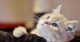 صور قطط صغيرة , اجمل قطط في العالم