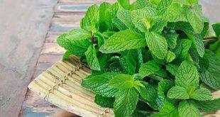 النباتات الطبية في المنام , الطب البديل في الحلم